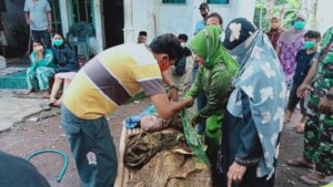 Penemuan Mayat Di Kali Tanggul Gegerkan Warga Dusun Pondok Waluh, Desa Kencong, Jember