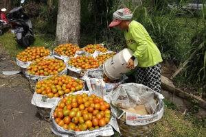 Harga Tomat Sayur dan Telur Ayam Ras Menurun, Sumenep mengalami Deflasi